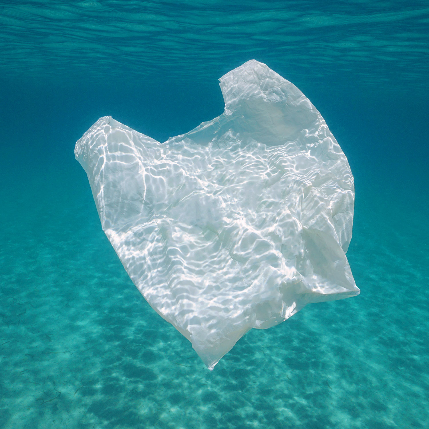 Image of single use plastic bag in water